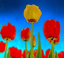 Dutch Tulips part 2 by AlexFHiemstra