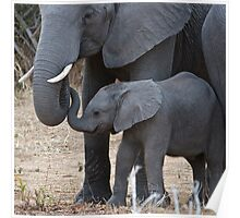 Love & Trust - Mother & Baby African Elephants Poster