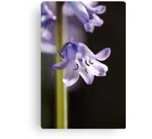 Bright and Happy as a Bluebell Canvas Print