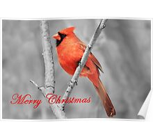 Red Cardinal Christmas Poster