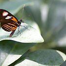 Flutter On By by AllanDavisJr