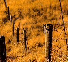 Sunny Field/ Crop - Nature Photography by JuliaRokicka
