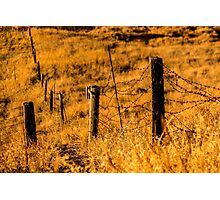 Sunny Field/ Crop - Nature Photography Photographic Print