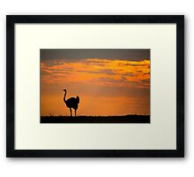 OSTRICH SUNRISE Framed Print