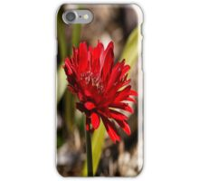 A Solitary Simple Red Spring Flower iPhone Case/Skin