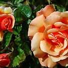 Phases of an orange rose by Arie Koene