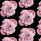 Peonie Pink  by appfoto