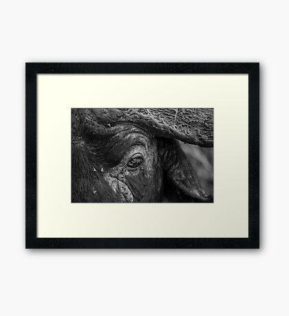 BUFFALO'S EYE Framed Print