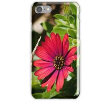 A Simple Red Flower, Spring is here! iPhone Case/Skin