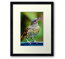 Young Bower.... Framed Print