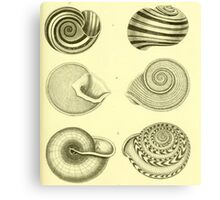Vintage Natural History Snails Canvas Print