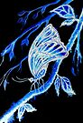 Wings of a Butterfly by Linda Callaghan