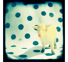 Look at ewe Photographic Print