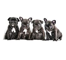 Four Frenchies by Andrew Bret Wallis