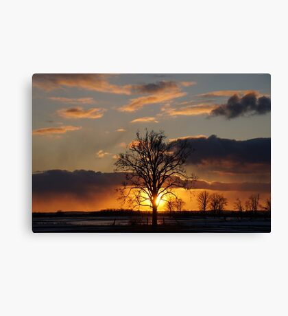Tree sunset field  Canvas Print
