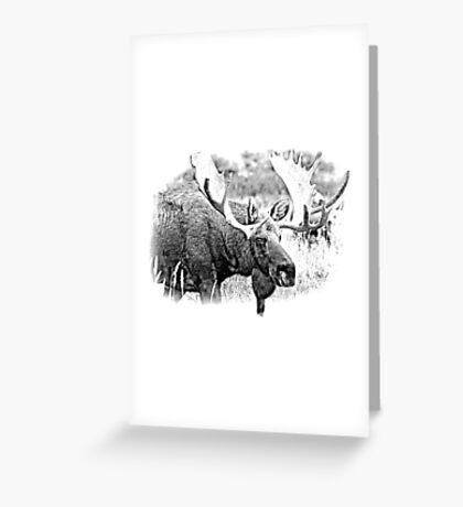 Bull Moose. Wildlife Moose. Moose Antlers. Canadian Moose. Alaskan Moose. Greeting Card
