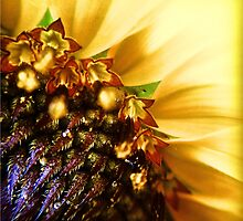 Sunflower macro by Stacie Forest