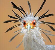 Secretary bird portrait close-up by Johan Swanepoel