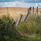 Prairie Land  by Judy Grant
