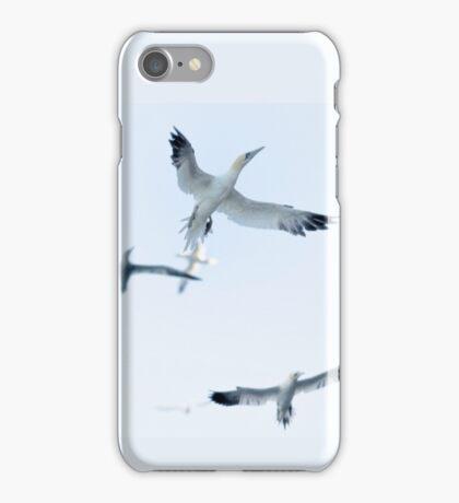 Gannets iPhone Case/Skin