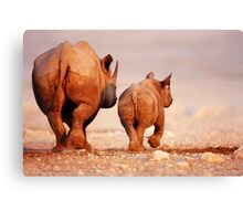 Black Rhinoceros calf and cow  Canvas Print