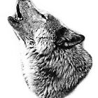 Wolf Howling. Digital Wildlife Image. by digitaleclectic