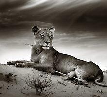 Lioness on desert dune by johanswanepoel
