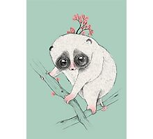 Fat Loris! Photographic Print