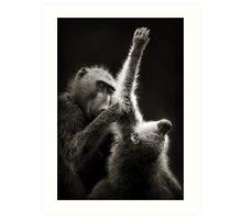 Baboons grooming Art Print