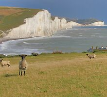 Sheep and the Seven Sisters - HDR by Colin J Williams Photography