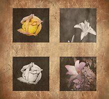 Rose and Lily Composite by designingjudy
