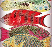 Parrot fish - Papageien Fische by Krzyzanowski Art