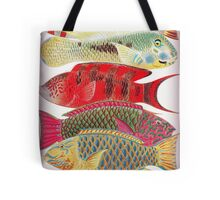 Parrot fish - Papageien Fische Tote Bag