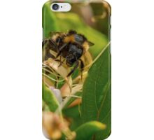 Yet Another Bumble Bee on the Honeysuckle iPhone Case/Skin