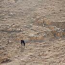 Black Donkey in Yellow Desert by cishvilli