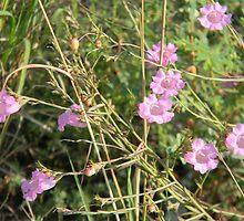 Purple Gerardia, Endangered by Navigator