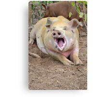 Yawning Pig Canvas Print