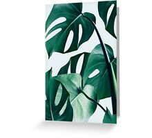 Monstera #redbubble #artprints Greeting Card