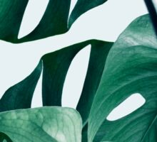 Monstera #redbubble #artprints Sticker