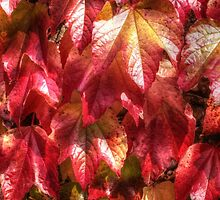 Autumn Leaves by AndyHuntley