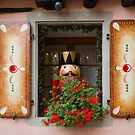 "Window of ""Magic of Christmas"" Shop by Yair Karelic"