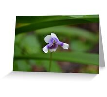 Lonely little flower Greeting Card