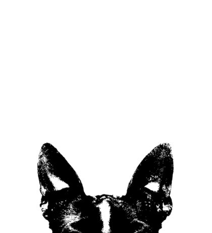 Boston Terrier Dogs Face Sticker