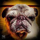 Grumpy Pug by boodapug