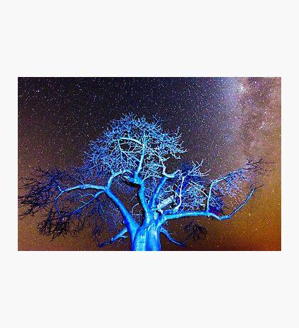 Starry Night in Botswana Photographic Print