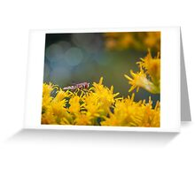 Hoverfly Profile Greeting Card