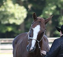 Deer Run Horse Show Club Sept. 20, 2014 (53) by DLitefulImagery