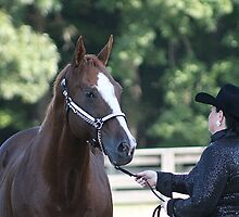 Deer Run Horse Show Club Sept. 20, 2014 (55) by DLitefulImagery