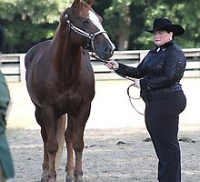 Deer Run Horse Show Club Sept. 20, 2014 (61) by DLitefulImagery