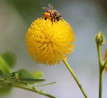 Fluffy Bee by jmethe